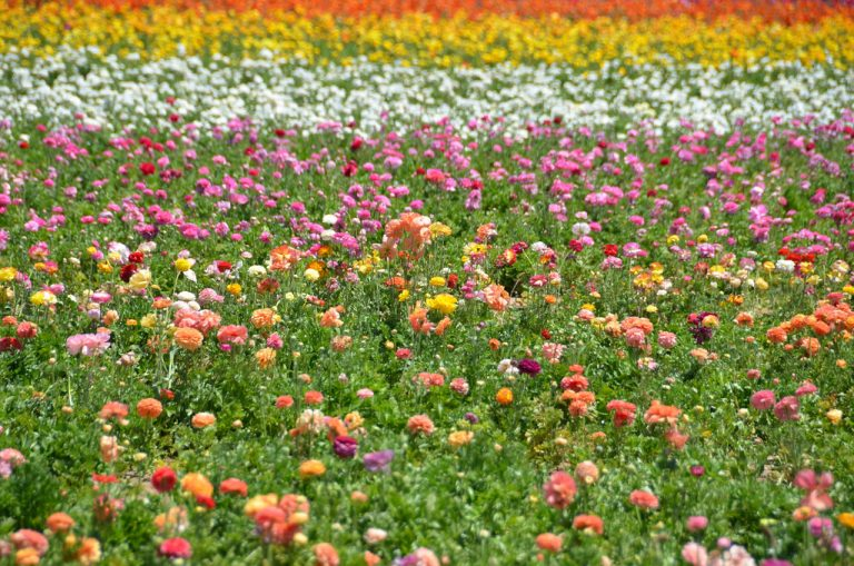 FLOWERS THAT ARE GROWN NOT FLOWN